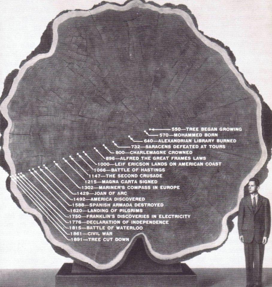 Fotografía de un tronco de secuoya para dendrocronología